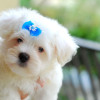 Puppies for Better Health